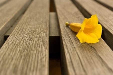 Yellow flower on a garden chair