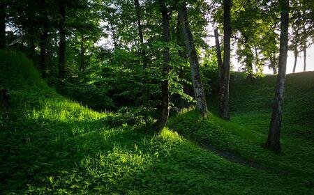 Sunbeams in Natural Woodland