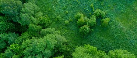 Top view wide shot of a forest