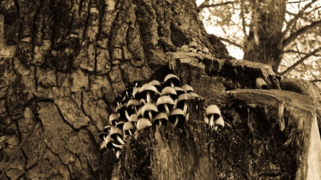 Mushroom growing from tree in a forest. Stock Photo