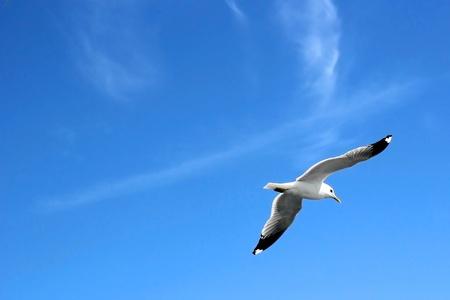zwerm vogels: Seagull vliegen hoog in de lucht Stockfoto
