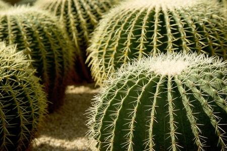 Close up shot of cacti in botanical garden