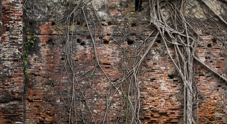 Background of ancient brick wall and roots
