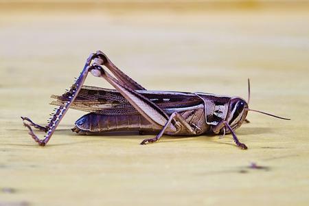 A grasshopper on a wood board