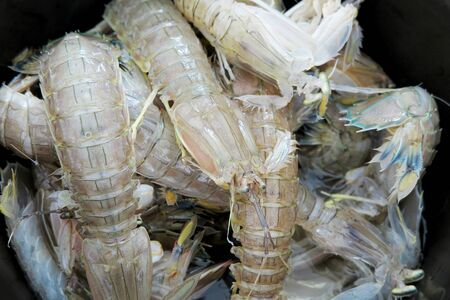 Mantis Shrimps close up shot in a pot selling in fish market Stock Photo