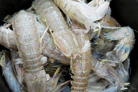 fish vendor: Mantis Shrimps close up shot in a pot selling in fish market Stock Photo