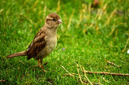 Vogel in het park Stockfoto - 21350761