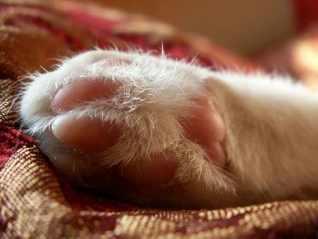 part of cat Stock Photo
