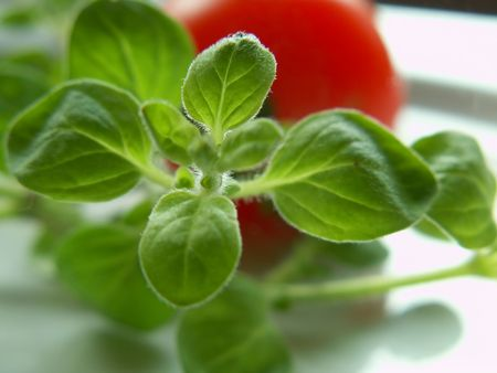 fresh oregano and tomato Stock Photo