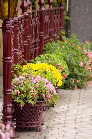 Autumn flowers Stock Photo - 572807