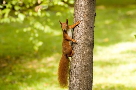 Squirrel on a tree in a park Stock Photo