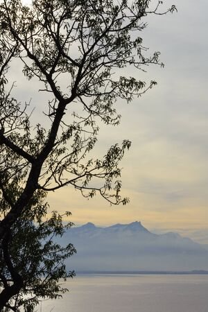 ramification: A tree on a fall morning over lake Geneva, facing Swiss Alps