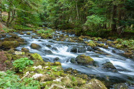torrent: Long exposure shot of a torrent in a forest in Switzerland