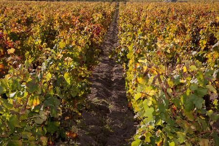 cuve: landscape of vines