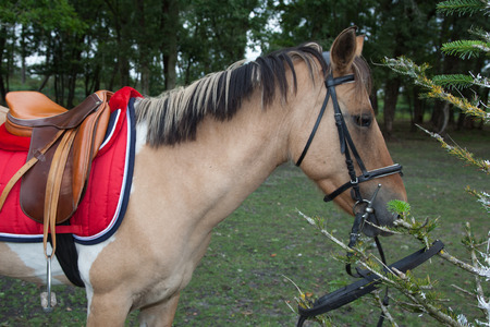 head collar: Horse in action - A  shot of a nice horse Stock Photo