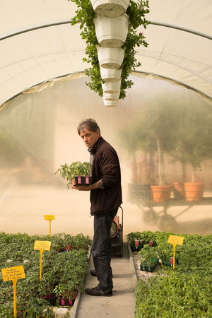 garden center: Man in a garden center, choosing plants