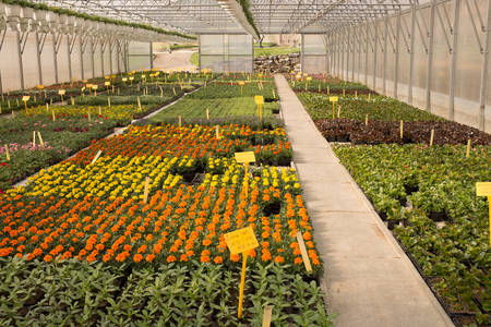 hot house: Various flowers and plants inside nursery - hot house