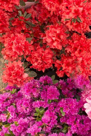 plant pots: Plant pots and flowers pots in a big market garden