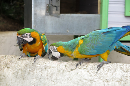 maccaw: Beautiful Parrots on summertime