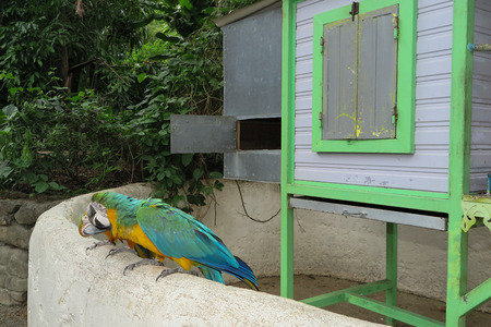 mccaw: Colourful parrot bird sitting on the perch
