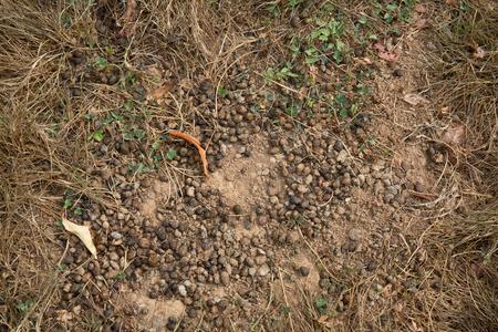 droppings: In a field -rabbit droppings