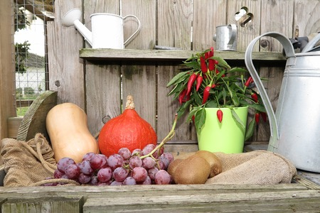 horn of plenty: Autumn fruits and vegetables under wooden background