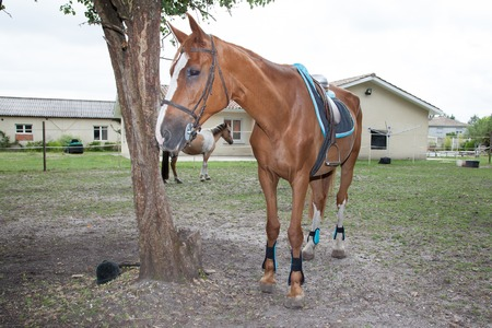 synchronously: Nice Horse portrait on a farm in summer