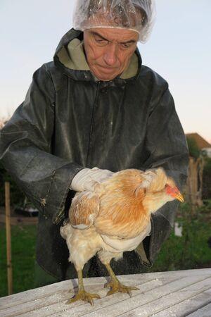 piojos: tratamiento para los piojos en una contaminaci�n de gallina fuera