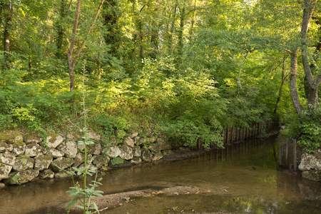 feuille arbre: belle vue sur la for�t du parc sur le ressort