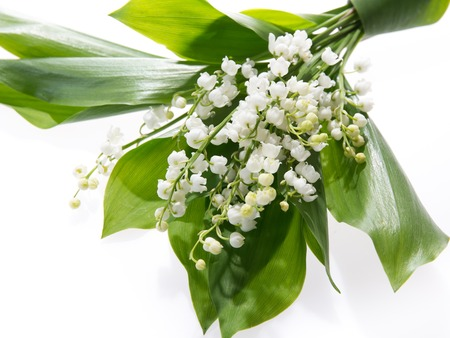muguet: Lily of the valley isolated on white background