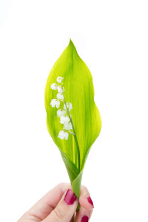 muguet: hand of a woman holding muguet ( lily of the valley ) Stock Photo