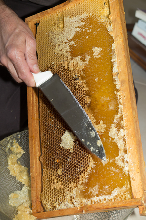 hives: Raw honey being harvested from bee hives Stock Photo