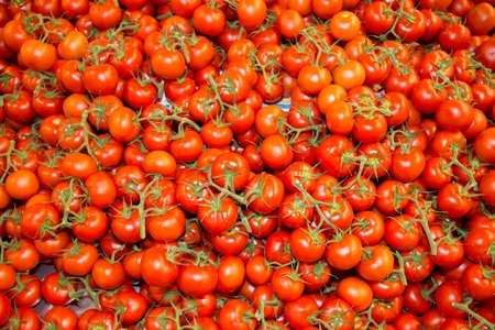 bunchy: Background of plenty of red branch tomatoes