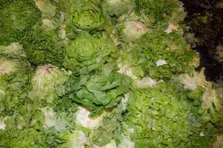 lettuces: Fresh lettuces in a supermarket, green salad background