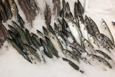 plaice: Fresh fish catch on sale at local fish market