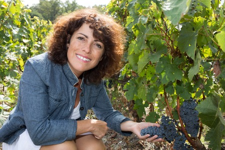 wine industry: Female farmer holding fresh grapevine in the country. Wine industry concept.