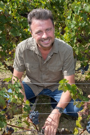 andsome man in his vineyard picking grapes Stock Photo