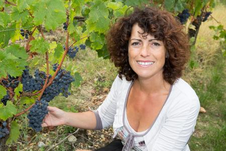 grower: Woman, vine grower, inspecting the fresh grape crop in the vineyard.