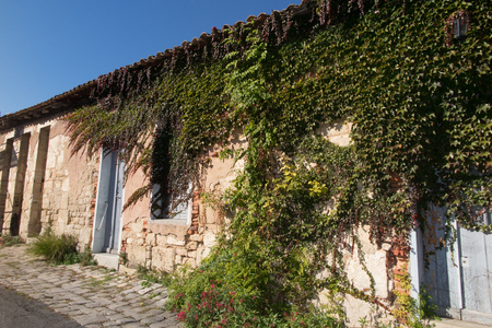 old house in france with green nature on the wall Stock Photo
