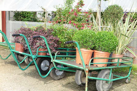 nurseryman: Wagons with plants in wait in the commercial garden center