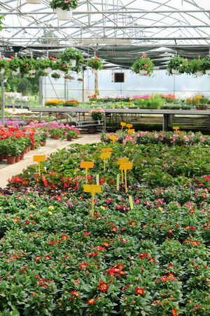 nurseryman: From inside the greenhouse to a commercial garden center
