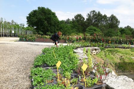 woman customer buys her plants in an outdoor garden center