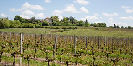 bordeaux region: vineyards near Bordeaux in France Stock Photo