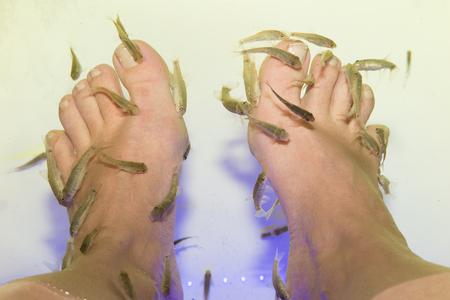 Fish spa. Rufa Garra fish spa pedicure massage treatment Therapy