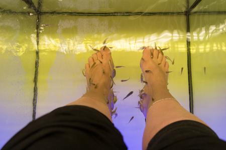 The procedure for Rufa Garra fish spa pedicure massage treatment on woman feet Stockfoto