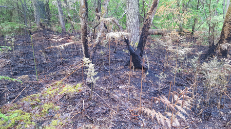 the damage of a fire in a forest