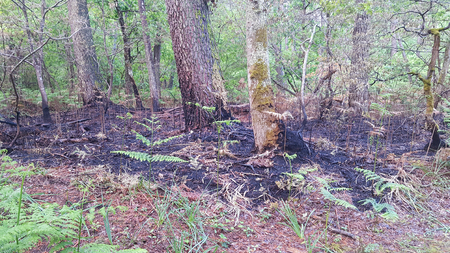 dead floor in forest after fire destruction Stock Photo