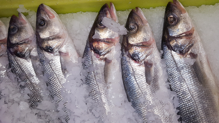five fishes on ice in market for sale