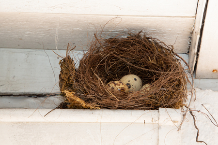 little egg nest in human home gutter