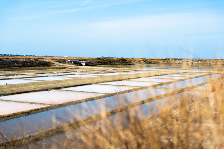 Salt marsh in summer day in Ile Re in France